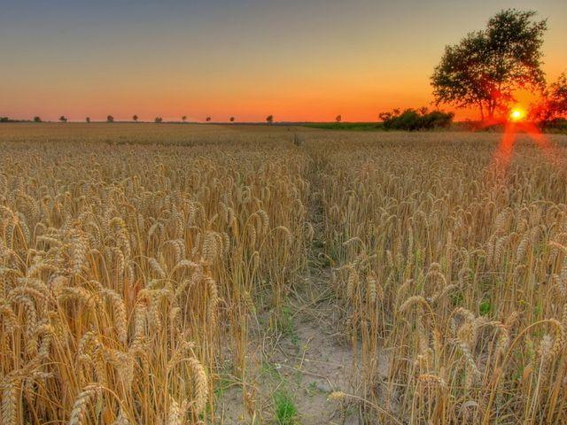 Мировой Зерновой Форум «Global Grain Sochi» — международное деловое мероприятие, которое состоится 26-28 июня в г. Сочи.